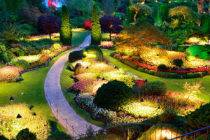 Colorful garden with lights at night time